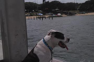 Pet Friendly St. Augustine Lighthouse
