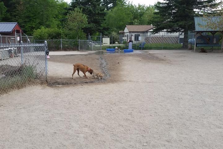 Pet Friendly Derry Dog Park