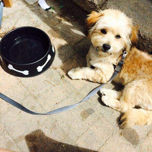 Dog Friendly Newport Beach Restaurants