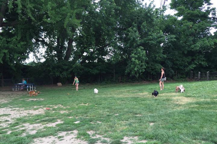 Pet Friendly Stamford Dog Park at Courtland Park