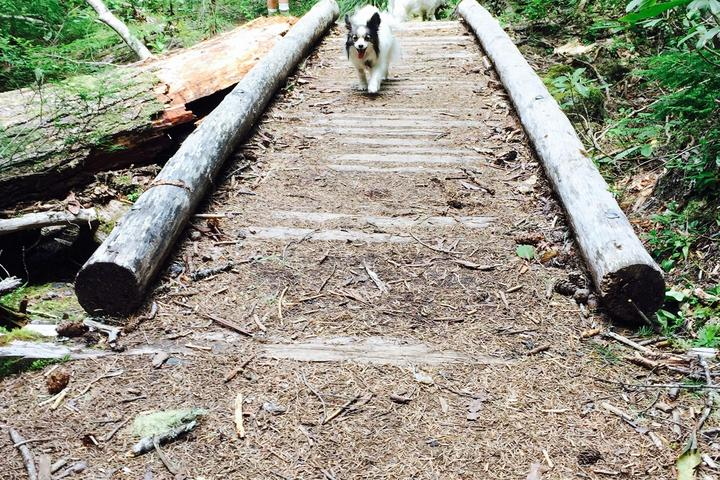 Pet Friendly Proxy Falls Trail