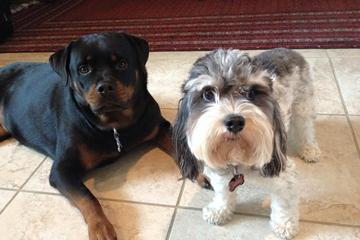 Pet Friendly No Place Like Home Pet Sitting, LLC