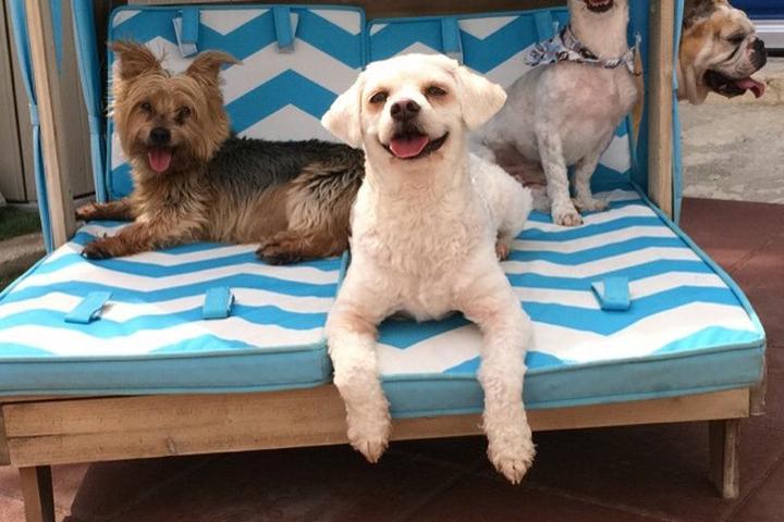 Directory of Doggie Daycare & Boarding in Orlando, FL