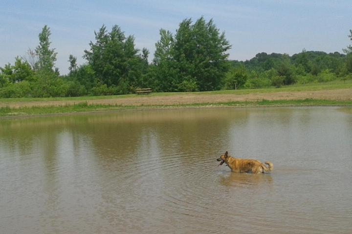 Pet Friendly Cleary Lake Regional Dog Park