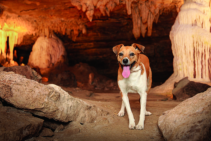 Pet Friendly Fantastic Caverns