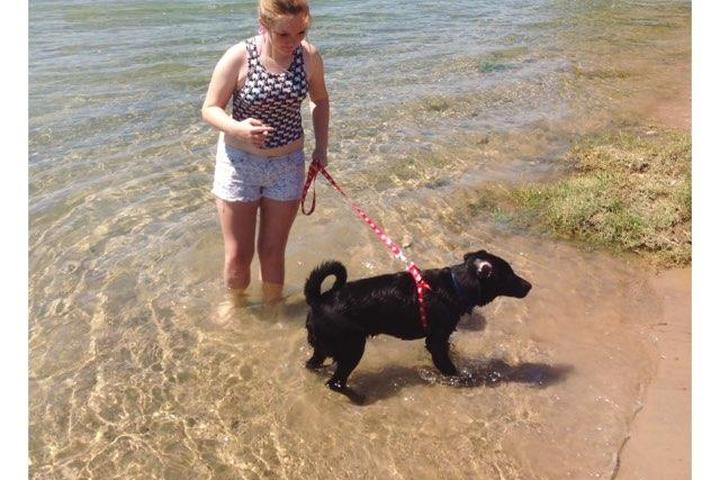 Off-Leash Dog Parks in Bullhead City, AZ - Bring Fido