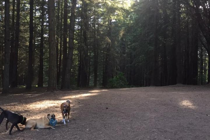 Pet Friendly Strawberry Hill Dog Park