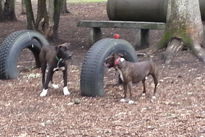 Pet Friendly Randolph Dog Park