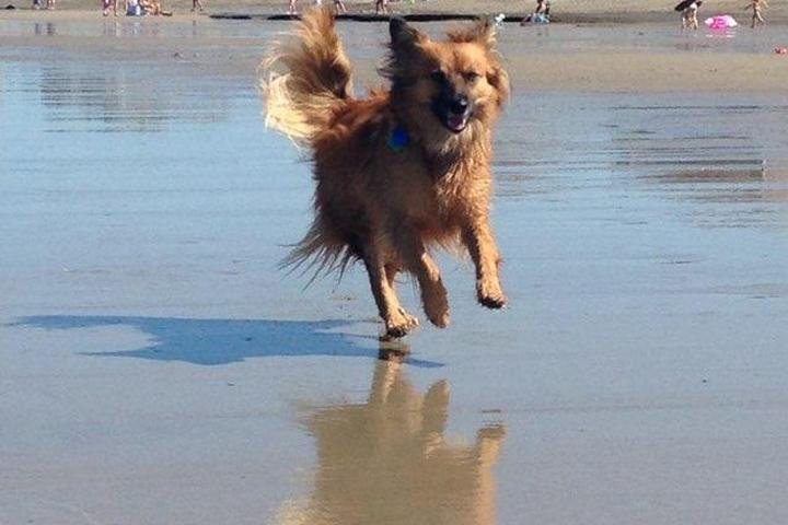 Pet Friendly Marshfield Beaches