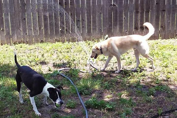 Pet Friendly Puppy Power Dog Resort