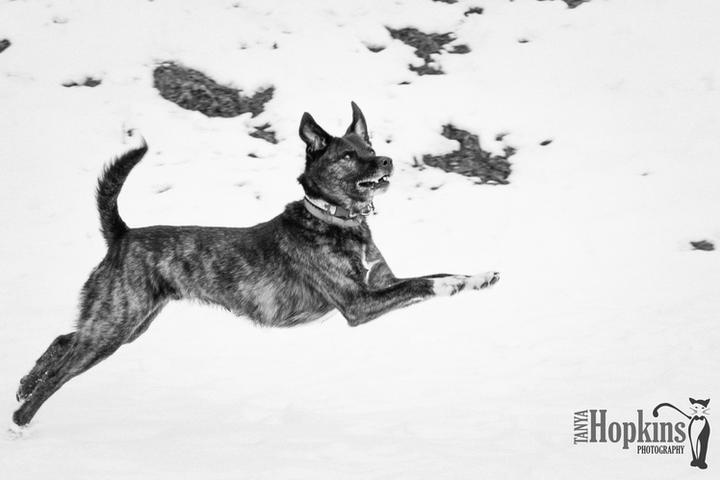 Pet Friendly Tanya Hopkins Photography
