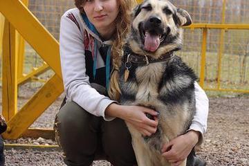 Pet Friendly VIKING - Dog Training