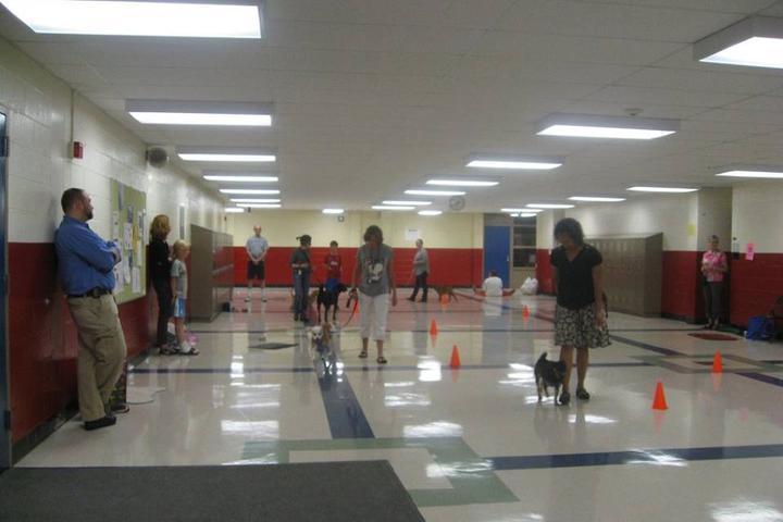 Pet Friendly A2 Canine Coach