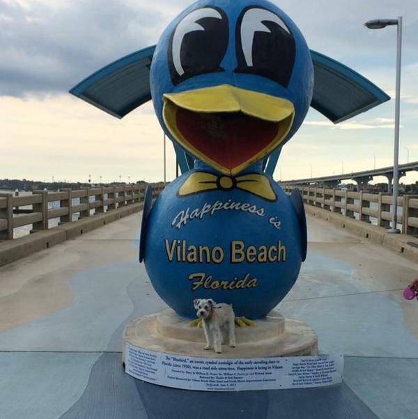 Vilano Beach Dog Friendly Restaurants