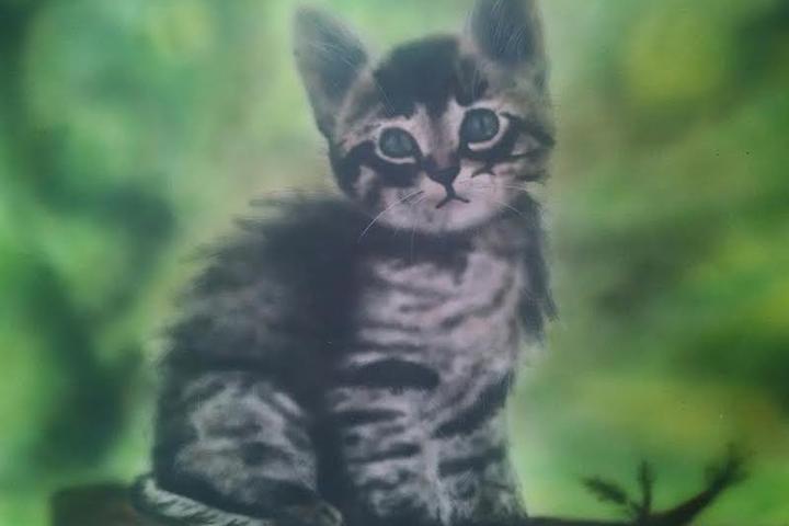 Pet Friendly Aesthetic Artworks Pet Portraits