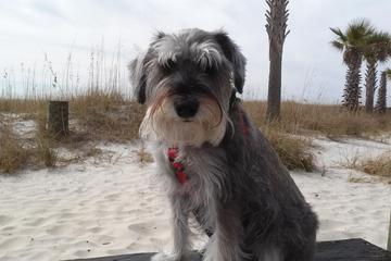 Shaggy S Biloxi Beach Is Pet Friendly