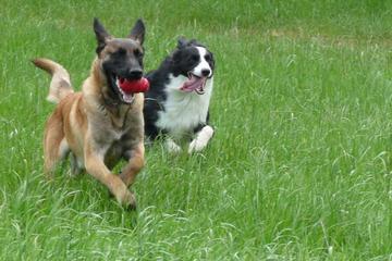 Pet Friendly Pawficient Pet Care