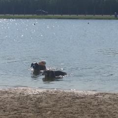 James Island Dog Park
