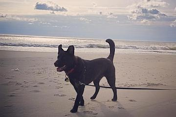 Pet Friendly Fenwick Island State Park