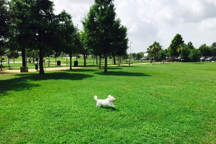 Pet Friendly Pawm Springs Dog Park