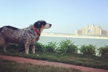 Pet Friendly Pet Sittiing in Dubai