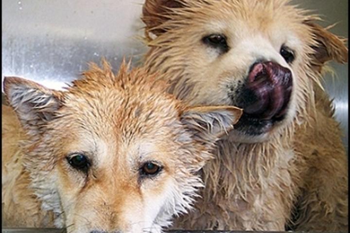 Pet Friendly The Pet Wash
