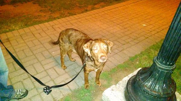 Dog Friendly Hotels Providence Ri