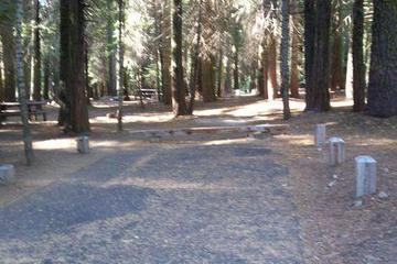 Pet Friendly Dinkey Creek Campground