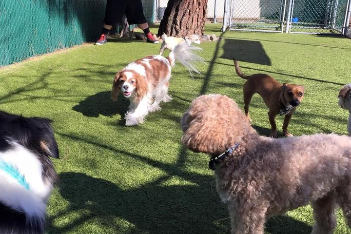 Pet Friendly Dr. Dave's Doggy Daycare, Boarding & Grooming
