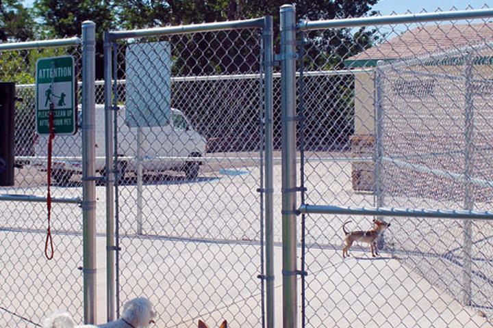 Pet Friendly City Park Dog Park