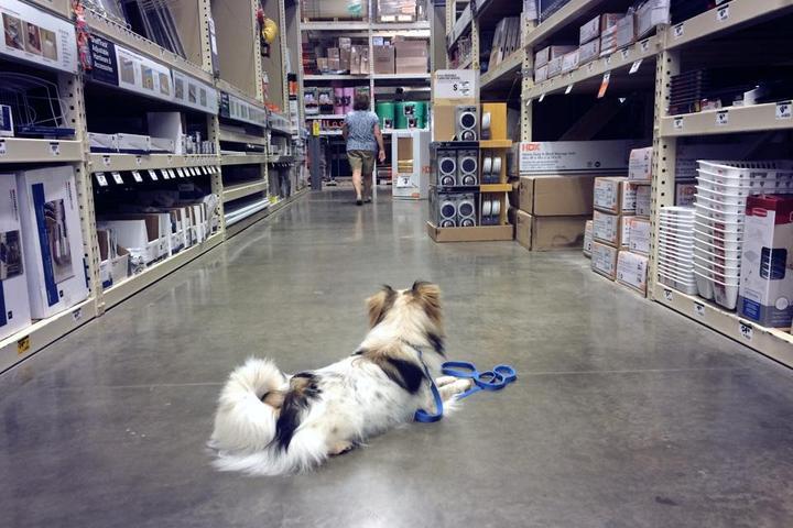 Pet Friendly Duskland Dogs Training & Behavior