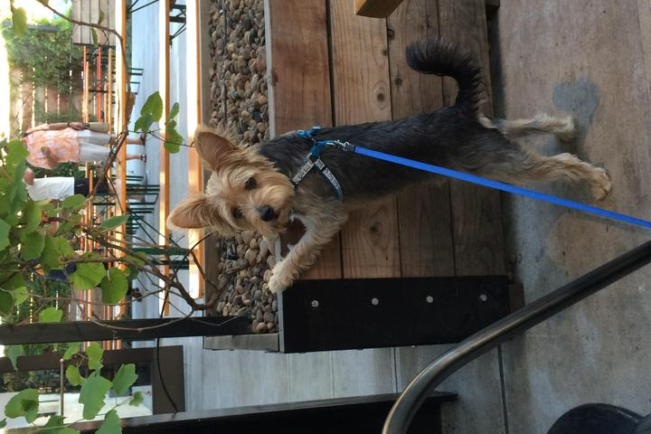 Dog Friendly Restaurants In Anaheim Ca Bring Fido