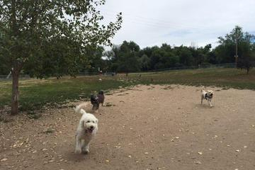 Pet Friendly Englewood Canine Corral