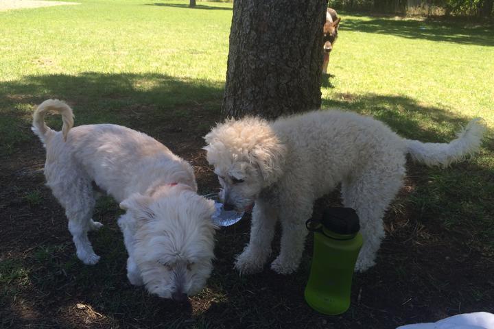 Pet Friendly Bicentennial Dog Park