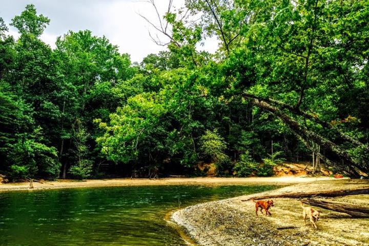 Pet Friendly McDowell Nature Preserve