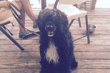 Pet Friendly Snappers Waterfront Cafe