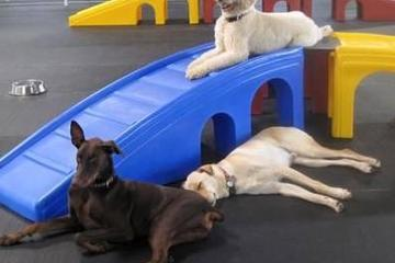 Pet Friendly Woofs and Wags Pet Lodge
