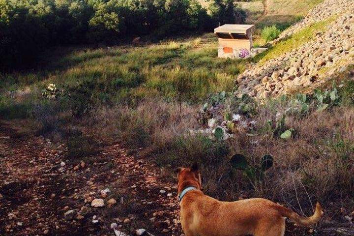 Pet Friendly Purgatory Creek Natural Area
