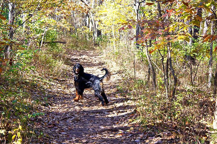 Pet Friendly Shawnee Mission Off Leash Dog Park