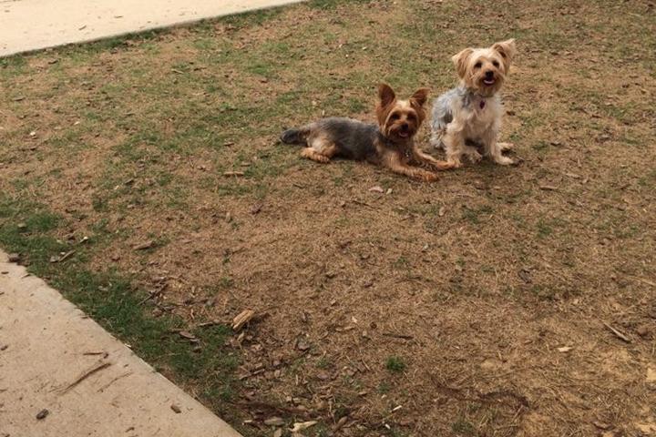 Pet Friendly Will May Dog Park at Sokol Park South