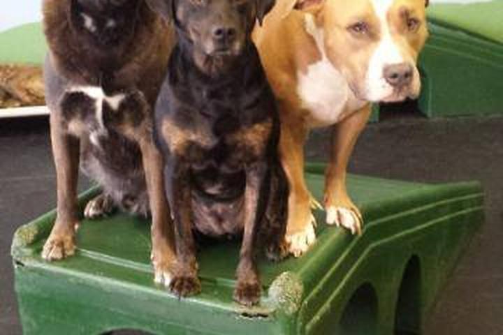 Pet Friendly Arlington Dog House