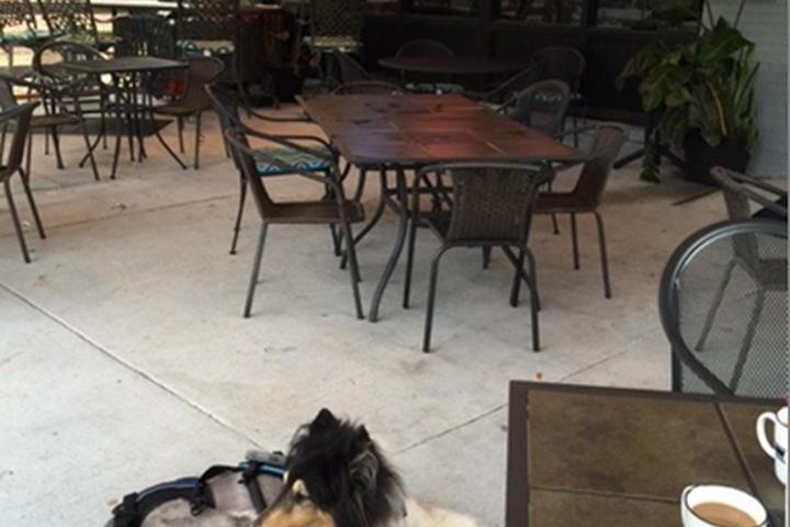 Pet Friendly Castaways Bar and Grill