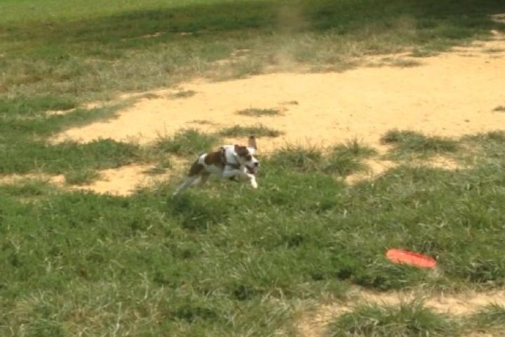 Pet Friendly Broadneck Dog Park