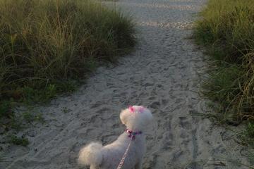 Pet Friendly Hilton Head Island Beaches