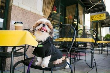 Pet Friendly Battery Park Book Exchange & Champagne Bar