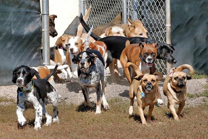 Pet Friendly Lucky Dog Pet Lodge