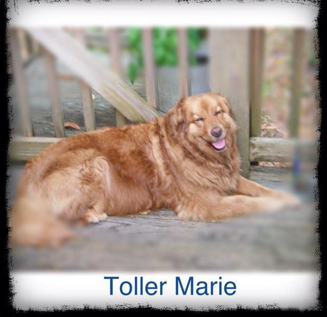Toller Marie