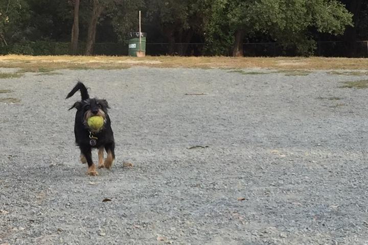 Pet Friendly Earl Warren Dog Park