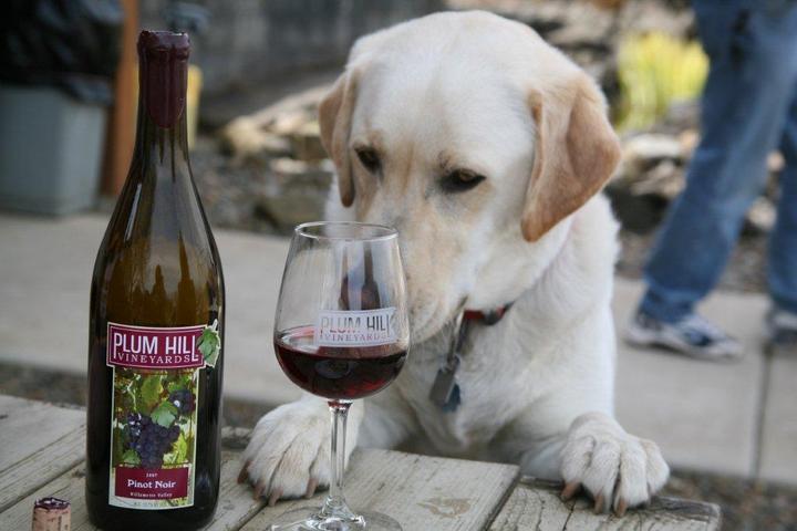 Pet Friendly Plum Hill Vineyards