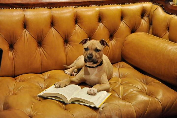 Pet Friendly Battery Park Book Exchange and Champagne Bar